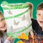 Butterfly Garden for just $10!