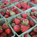 Pick-Your-Own Strawberries at Pallman's Farms!