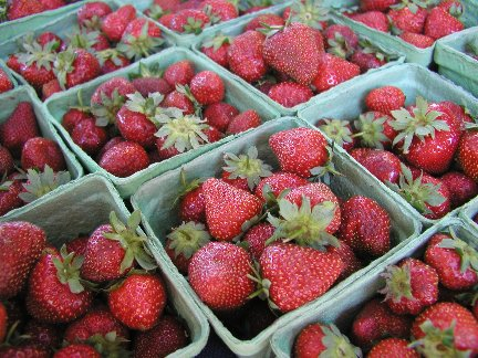 Pick Your Own Strawberries at Pallman Farms--Opens soon!