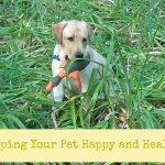 Ways to Save Money on Pet Medicine