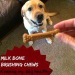 Milk Bone Brushing Chews Give my Dog Something To Smile About!