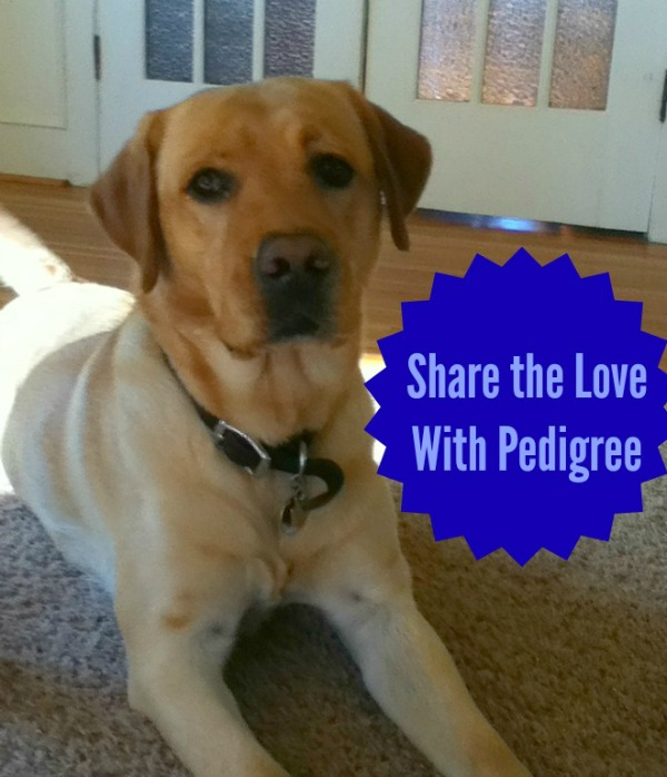 Share the Love With Pedigree