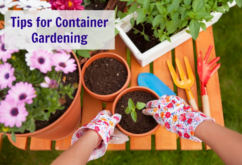 Tips for Container Gardening--Container Gardening is a great option when you don't have a large yard or you live in an apartment building.