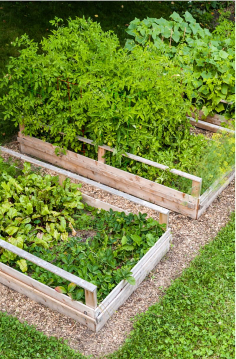 Square Foot Gardening Beds allow you to grow large amounts of produce in a small space