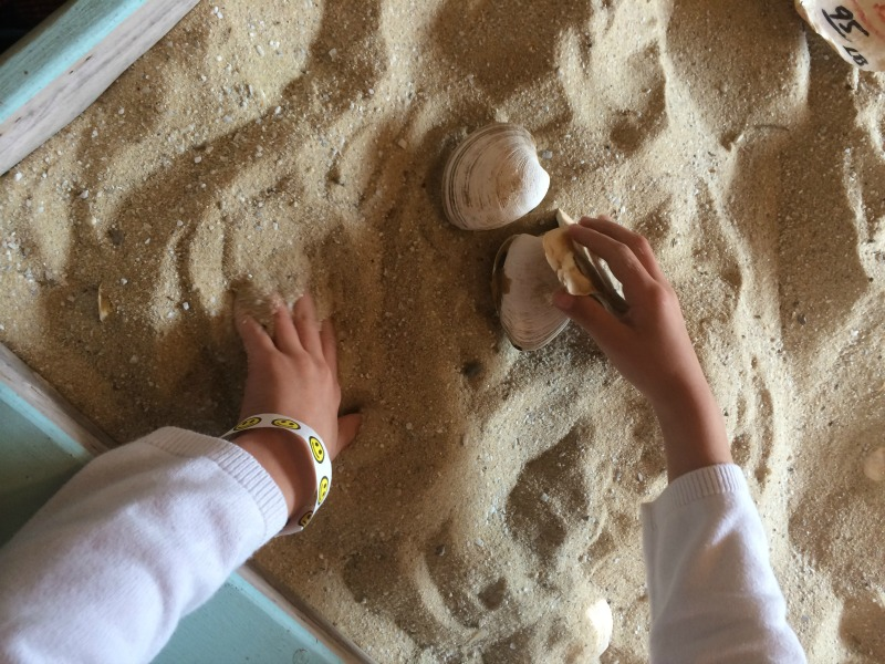 Searching for Clams in the sand at the Tuckerton Seaport