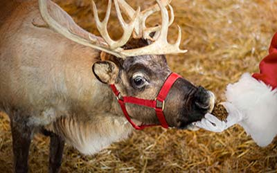 Where else can you see Santa and his reindeer other than at Christmas in Hershey? It is all part of the holiday magic!